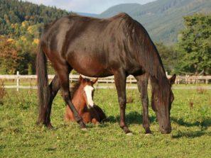 Ranč Mustang