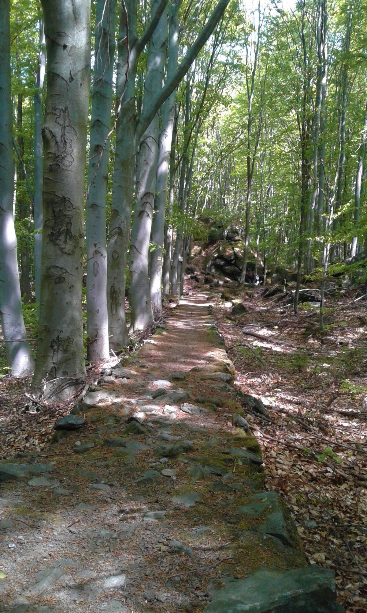 Baronská cesta naKamenitém kopci